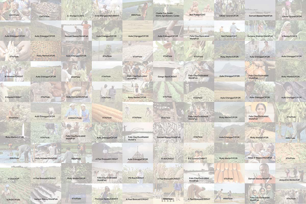 cgiar mosaic banner reverse credits